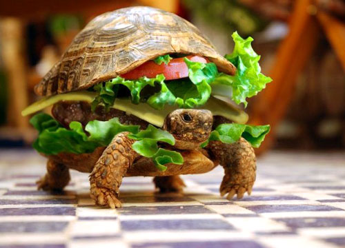 turtle-hamburger